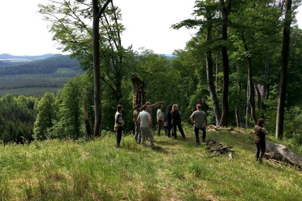 Cooperation and management in Model Forest Czech Republic
