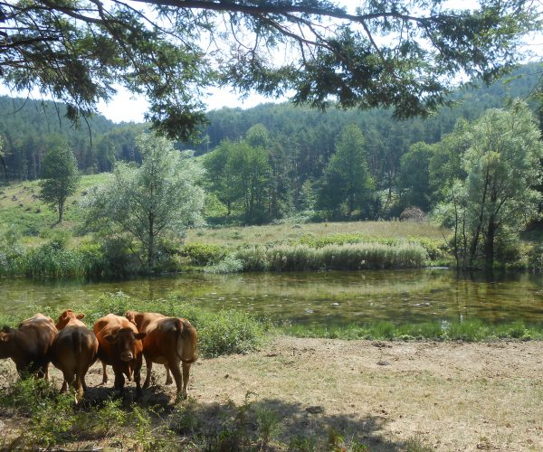 Montagne Fiorentine - Nature's harmony